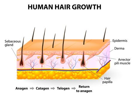 Human Hair growth- Dr Prasad